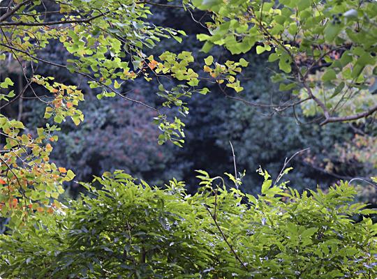 akiyama_07.jpg