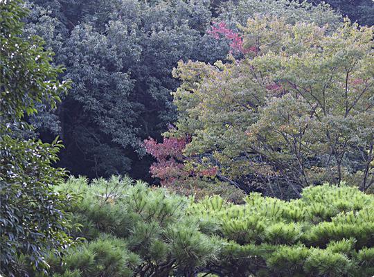 akiyama_08.jpg